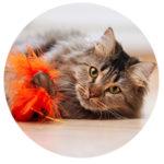 cat boarding / cat day care
