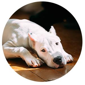 dogboardingcircle