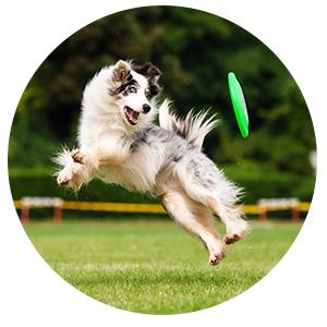 doggydaycarecircle