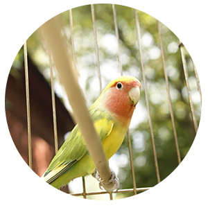 bird boarding